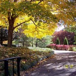 Virginia Fall Foliage Photos on flickr(r)