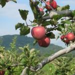 10 of Virginia's Tastiest Fall Food Festivals