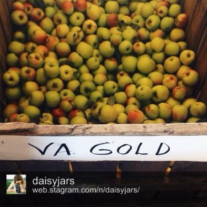 Fresh-picked Virginia Gold apples in Sperryville. Photo by @daisyjars.