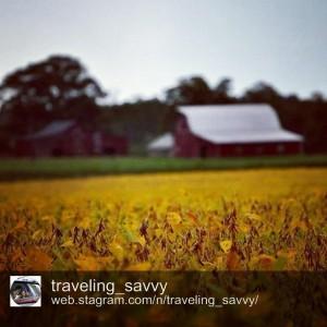 A Smithfield farm, captured by @traveling_savvy.