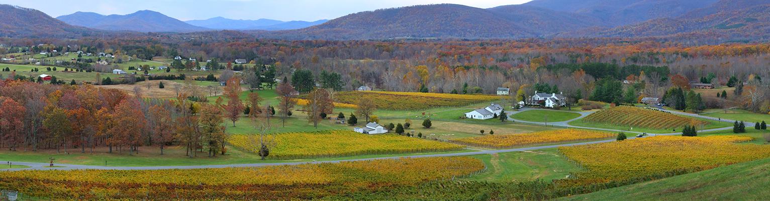 Veritas Farmhouse surrounded by Veritas Vineyard