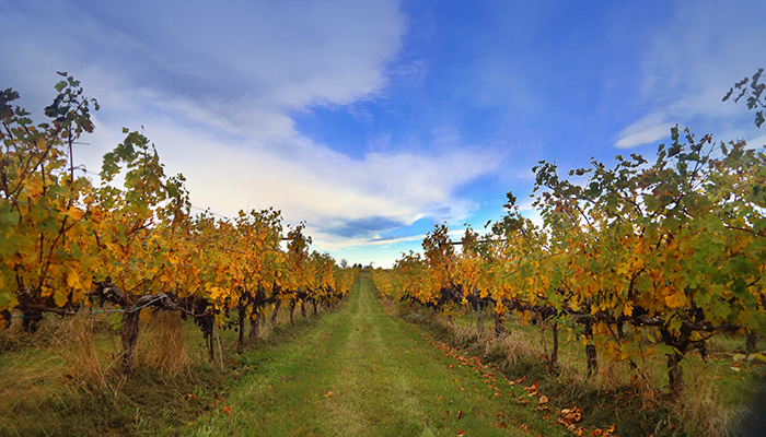 Breaux Vineyards. Photo by Steven Morris.