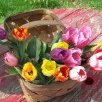 Spring Festivals in Virginia