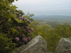 View from Monster Rock Trail