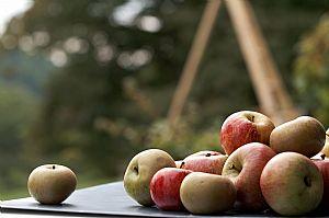 Foggy Ridge Cider Apples