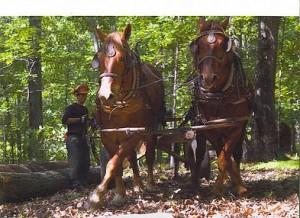 H. H. Horse Logging in Floyd, VA