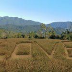 Giant LOVE Corn Maze Opens Saturday