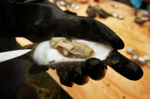 Raw Oyster. Credit: Blue Crab Bay Company