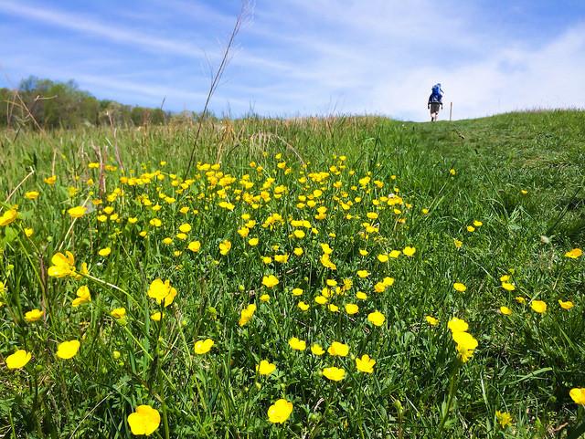 Sky Meadow State Park, Delaplane
