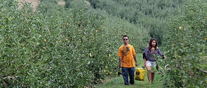 Marker-Miller Orchards