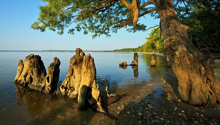 Chippokes Plantation State Park. Courtesy Photo.