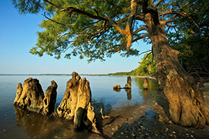 Chippokes Plantation State Park. Courtesy Photo.