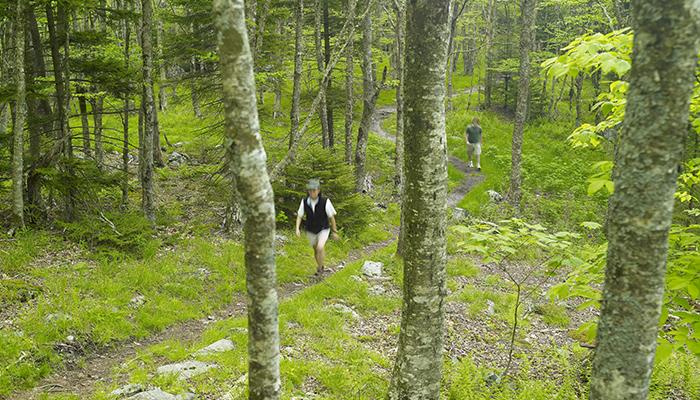 Grayson Highlands State Park. Photo by CameronDavidson@CameronDavidson.com.
