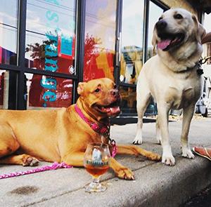Strangeways Dogs