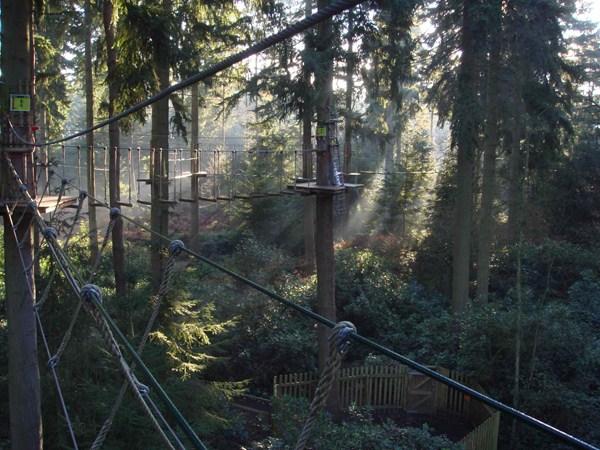 treetopadventures