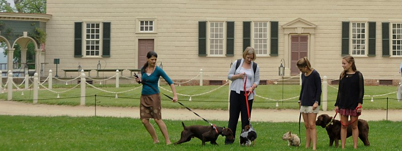 mount vernon dogs