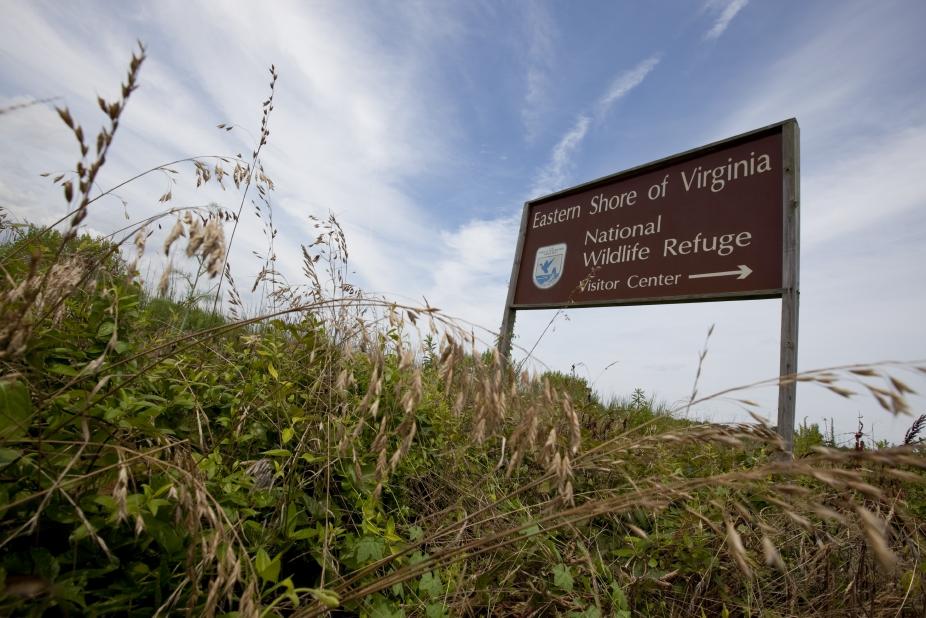 Eastern Shore of Virginia National Wildlife Refuge