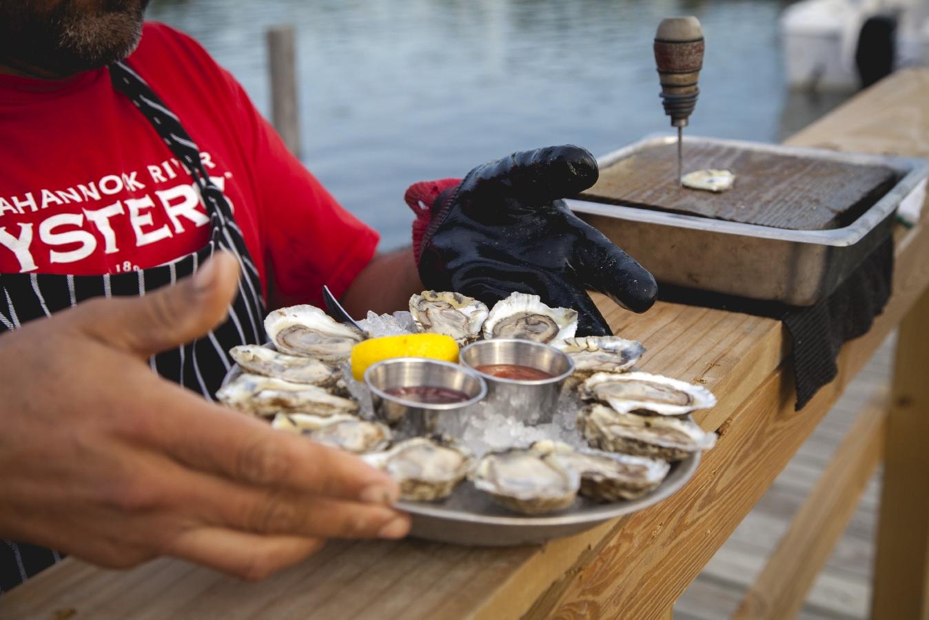 Rappahannock River Oyster