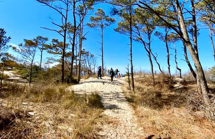 The Nature Bus: Group Tour at Savage Neck Dunes Natural Area Preserve
