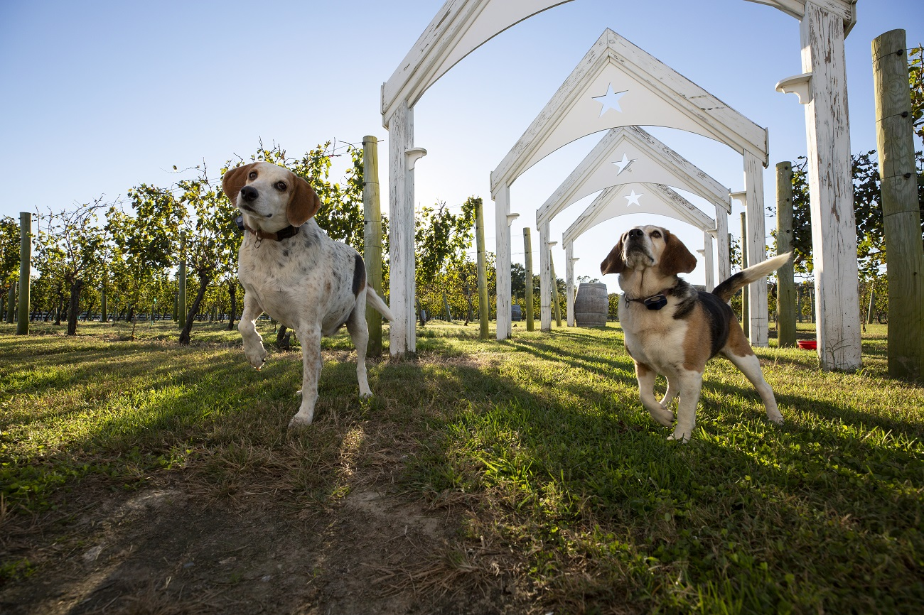 The Dog & Oyster Vineyard