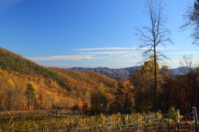 Ankida Ridge Vineyards