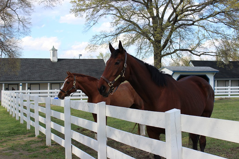 Secretariat descendants Groundshaker and Moe