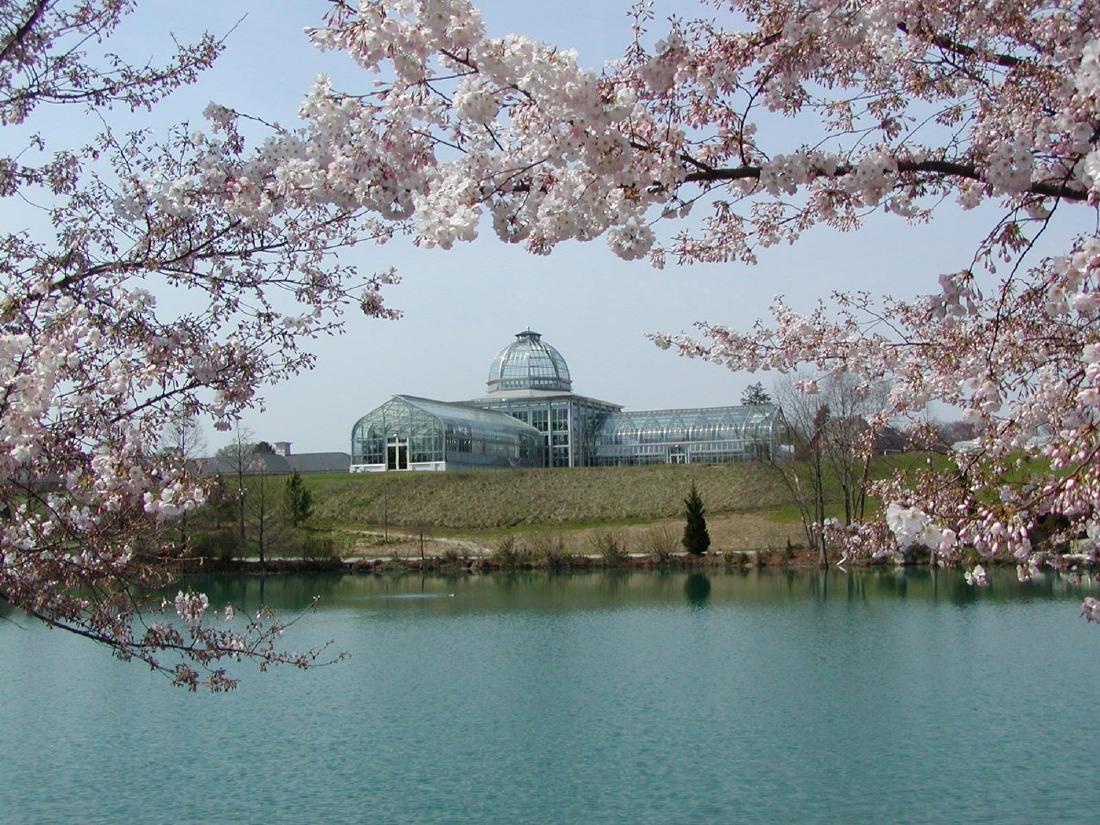 Lewis Ginter Botanical Garden cherry blossoms