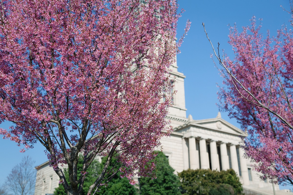 Masonic Memorial Spring Flowers
