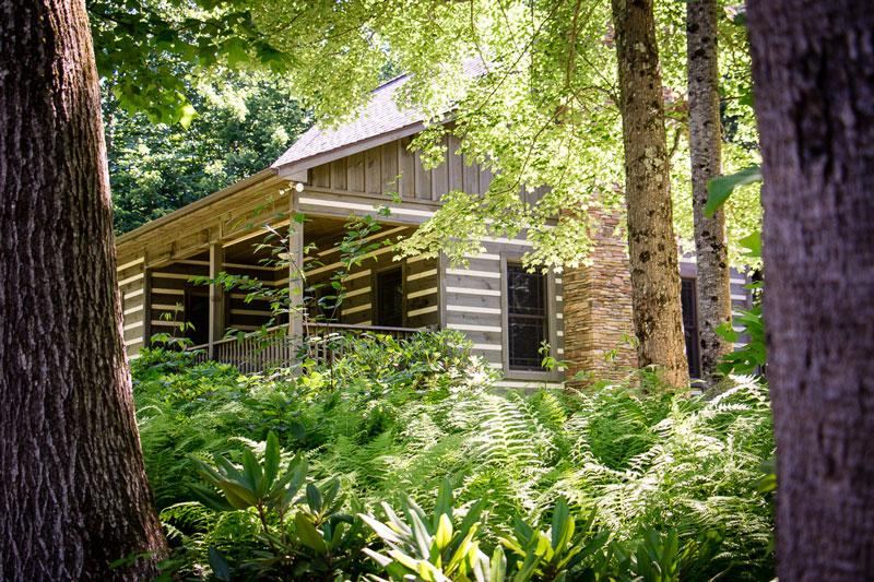 magic tree sanctuary mountain cabin