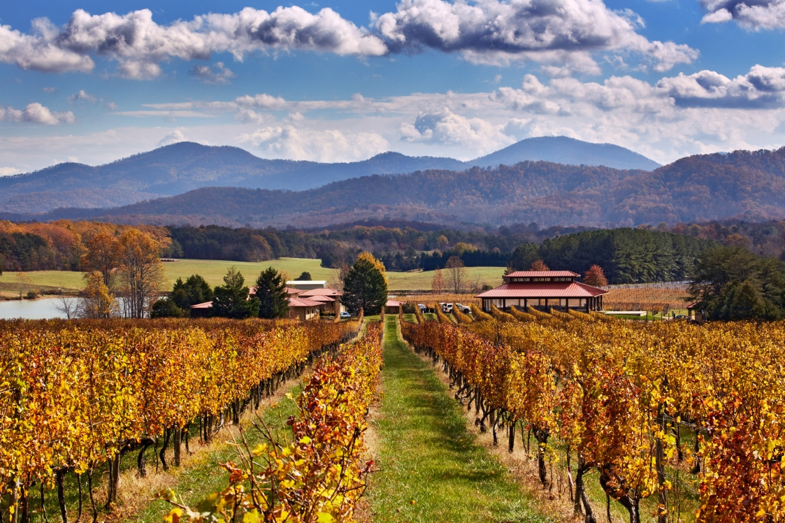 Veritas Vineyard invited visitors to visit, see how they grow grapes, how they make wine, and relax on their sun-drenched deck to enjoy the vistas and scenic Blue Ridge Mountains.