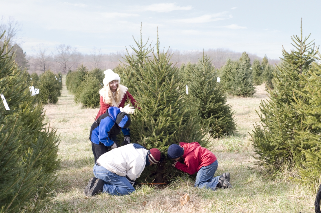 Enjoy the holiday season by choosing and cutting the perfect Christmas tree at Claybrooke Farm.
