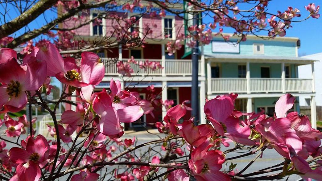00-20170217-Virginia-Southwest Virginia-Springtime-blooms