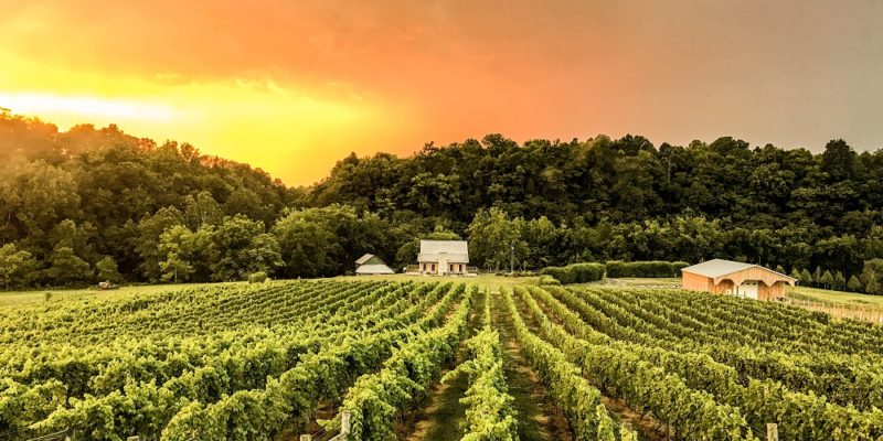 Iron Heart Winery at Fariss Farms