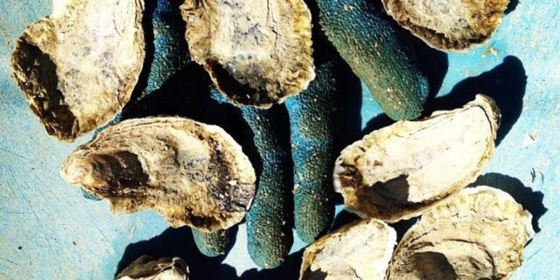 The Ultimate Oyster Trip to Virginia's Eastern Shore