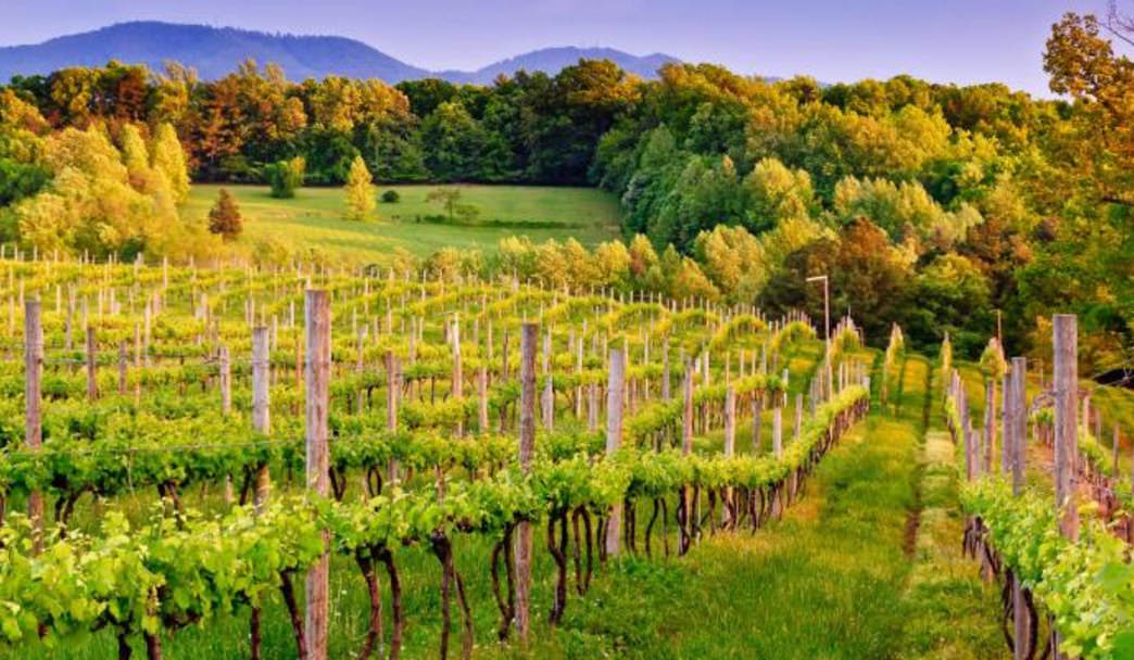 Sip & Stay at 7 of These Vineyard Properties in Charlottesville Area Wine Country