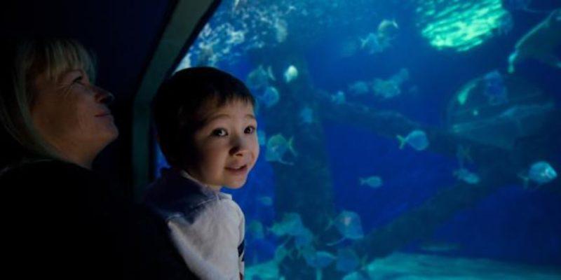 Explore the Virginia Aquarium