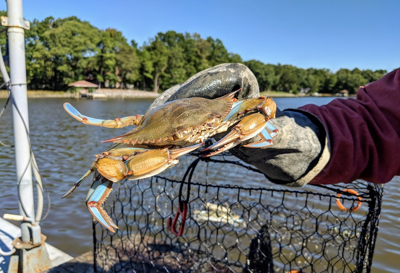 fat and happy crabs crabbes charter fishing