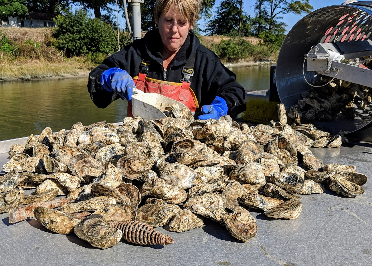 fat and happy oysters northern neck