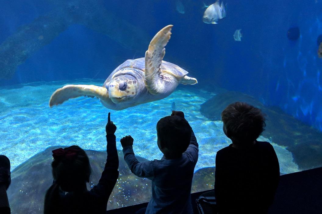 virginia aquarium in virginia beach