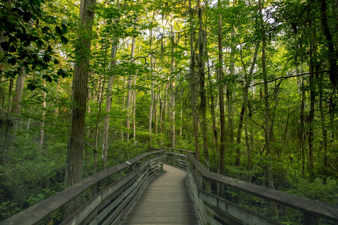 first landing state park virginia beach trail