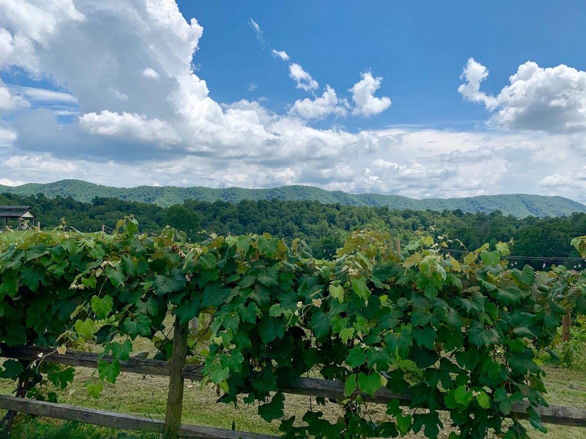Beliveau Winery