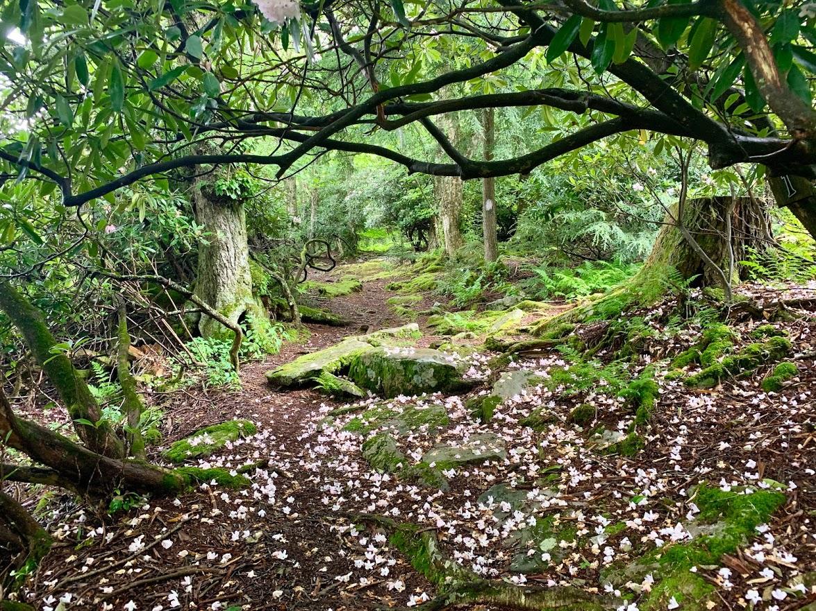 Mountain Lake Lodge Hiking Trails