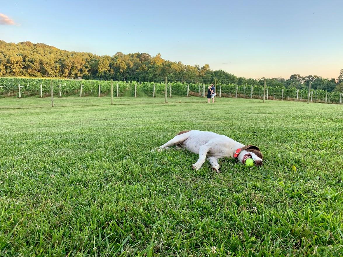 iron heart winery Rosie
