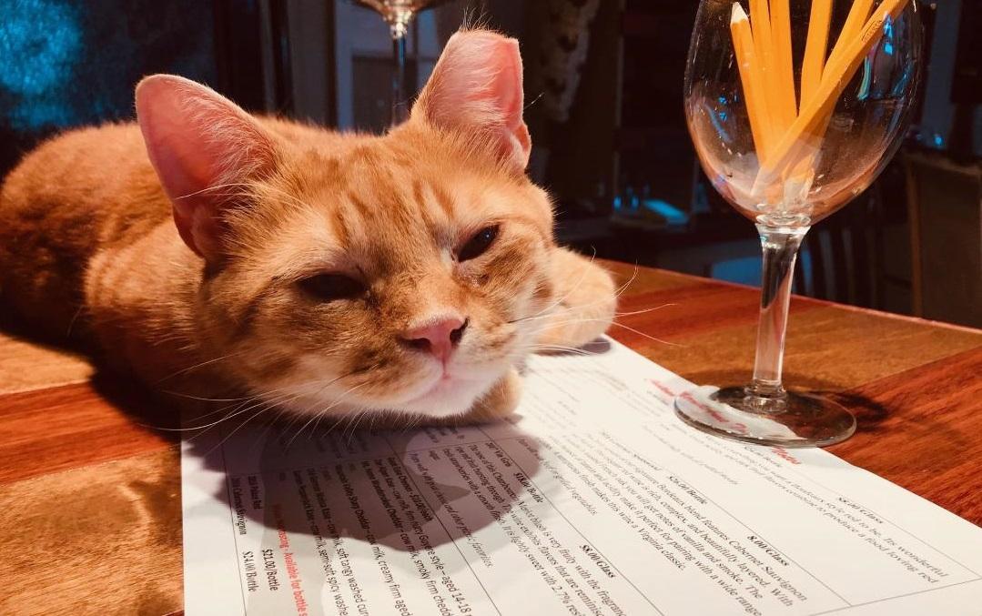 Chateau Merrillanne Brix White the winery cat