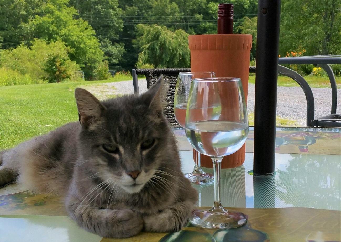 "mountainrose vineyards Rkatsiteli ""Rascal"" the winery cat"