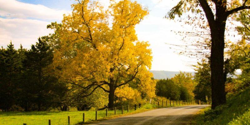 yellowtreebrook