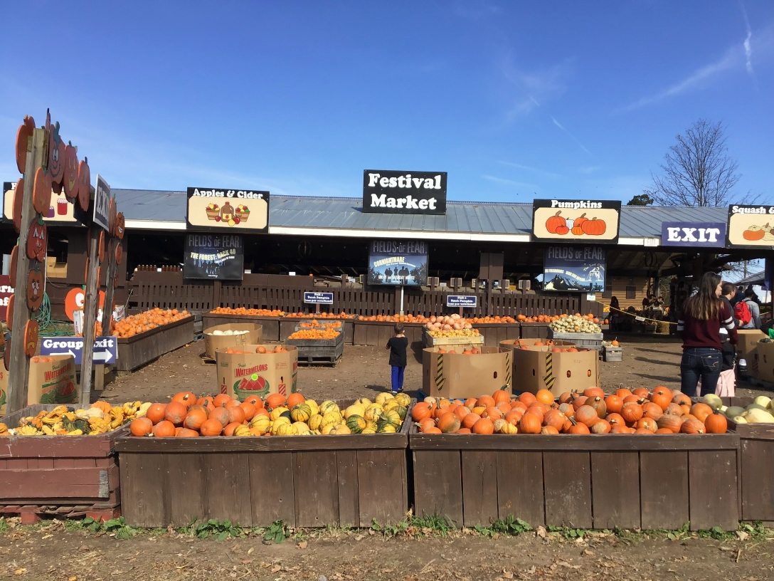 Cox Farms annual fall festival celebrates the season with autumn activities and foods like apples, pumpkins, a corn maze, cider and hayrides.