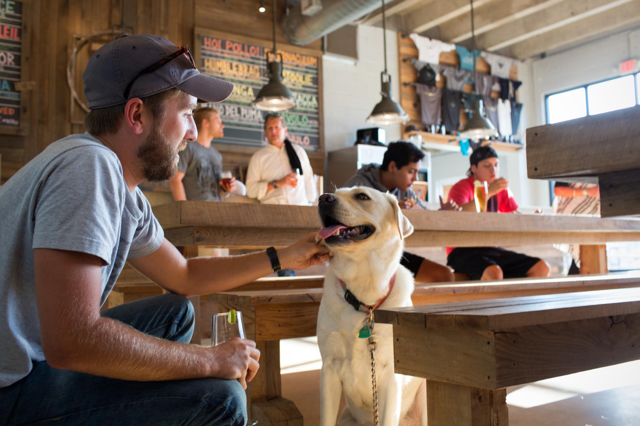 Pet Friendly Breweries